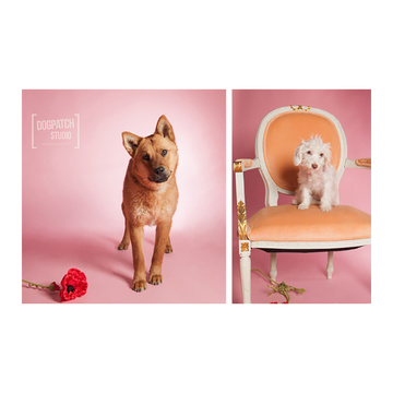 BD Fondale Carta Bd Pastel Pink 2,72x11m Art. 07112